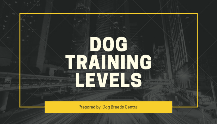 Dog Training Levels – Check Top 6 Different Levels Before Train Your Dog