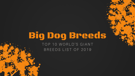 Big Dog Breeds | Top 10 World's Largest Dog Breeds For Family & Kids