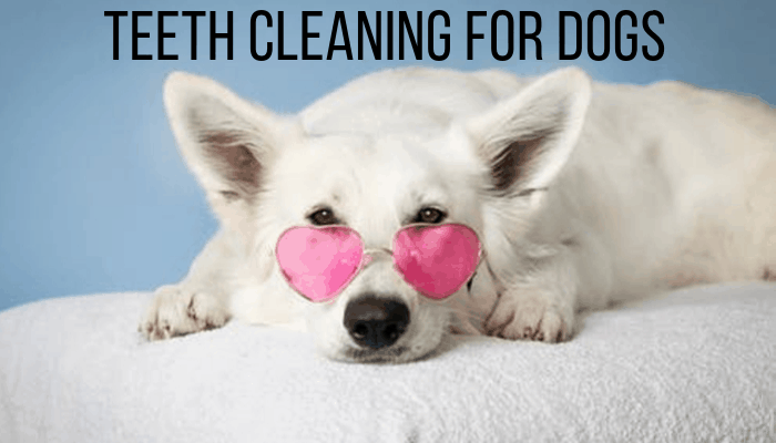 Teeth Cleaning For Dogs | 6 Secret Professional Tips, Hacks & Products