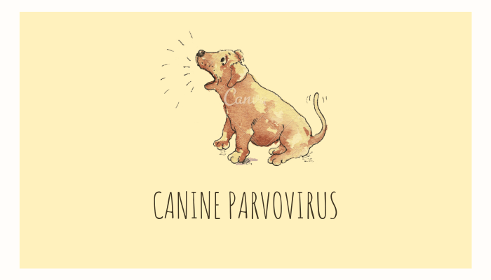 Canine Parvovirus | History, Stages, Symptoms & Treatment – Parvo in Dog