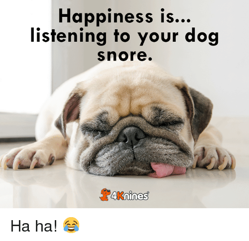 happiness-is-listening-to-your-dog-snore-4knines-ha-ha-41676615
